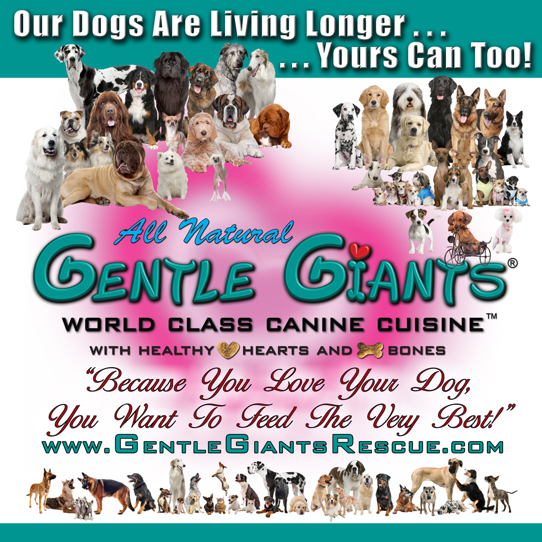 Tosa Inu Japanese Mastiffs at Gentle Giants Rescue and Adoptions